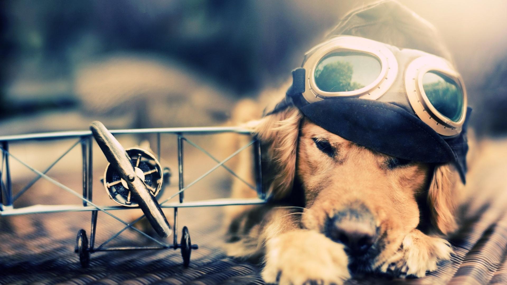 8805777-cute-dogs
